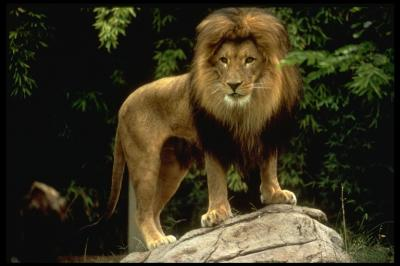 Le lion est mort ce soir pow wow tablatures accords for Dans jungle terrible jungle le lion est mort ce soir youtube